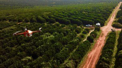 Photo of SeeTree recauda $ 11.5M para ayudar a los agricultores a manejar sus huertos