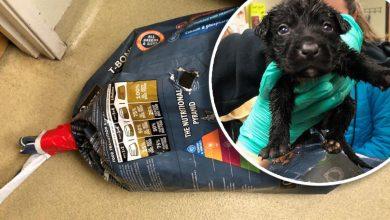 Desgarrador: abandonan 9 cachorros en bolsa sellada 11