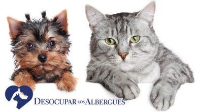 Photo of Desocupar los Albergues llega a su 5ta edición
