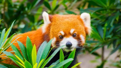 Photo of Mozilla agrega protección de minería de huellas dactilares y criptomonedas a Firefox