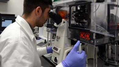 Photo of Recortes a Conacyt pueden colapsar centros de investigación en México: investigadores
