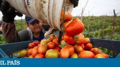 Photo of EE UU llega a un acuerdo con México para levantar los aranceles sobre el tomate