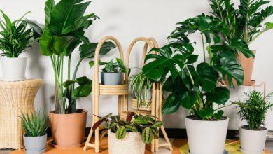 Photo of Bloomscape recauda $ 7.5 millones para venderle plantas de todos los tamaños