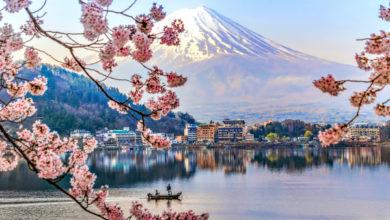 Photo of Con $ 30 millones en fondos frescos, The Bouqs planea plantar su negocio de entrega de flores en Japón