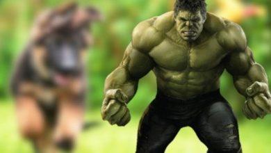 Hulk Puppy que nació verde brillante se vuelve viral 8