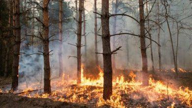 Photo of Pachama se lanza para apoyar la reforestación global a través de los mercados de carbono