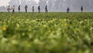 Photo of La startup Agritech DeHaat recauda $ 12 millones para llegar a más agricultores en India