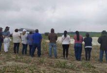 Photo of Localizan en Nayarit nueve cuerpos en fosa clandestina