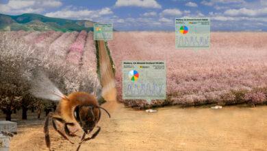 Photo of BeeHero se ensombreeza las colmenas para proporcionar 'polinización como servicio' con ronda de semillas de $4 millones