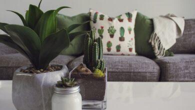 Photo of Estos son los motivos de por qué debes incluir cactus en tu decoración