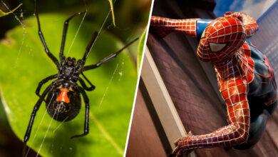 """Hermanitos se habrían dejado picar por venenosa araña para convertirse en """"Spider-Man"""" 2"""