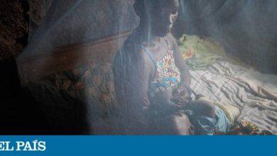 Photo of Una investigación ratifica que los mosquitos no transmiten la covid