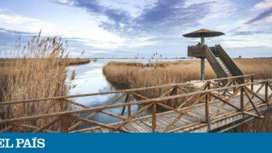 Delta del Ebro, horizontes rebosantes de vida 8