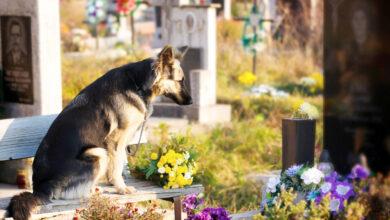 Photo of Muere Buddy, el primer perro contagiado con COVID-19 en EEUU