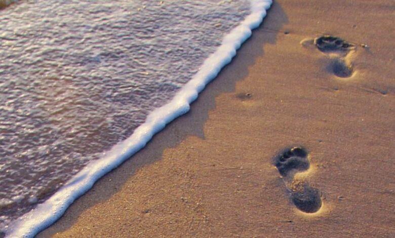 Descubre los increíbles beneficios de caminar por la playa 1
