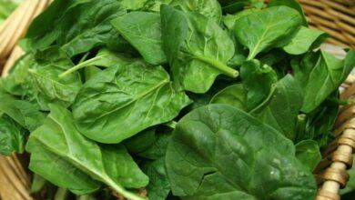 Photo of 5 alimentos ricos en fibra para cuidar la salud y la línea este verano