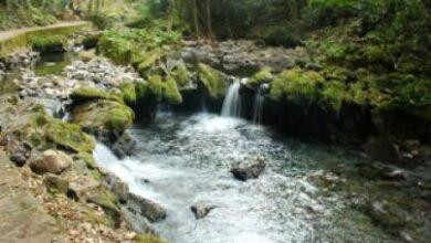 Photo of Deben fortalecerse las áreas naturales protegidas, afirma Fundar
