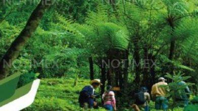 Photo of Destaca Panamá inversión en cuidado forestal y vida silvestre