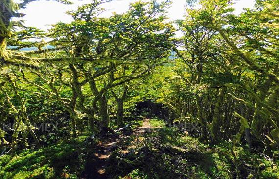 Etiopía va por segunda fase para plantar 5 mil millones de árboles 1