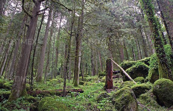 Promueve Panamá la reforestación y conciencia ambiental 1