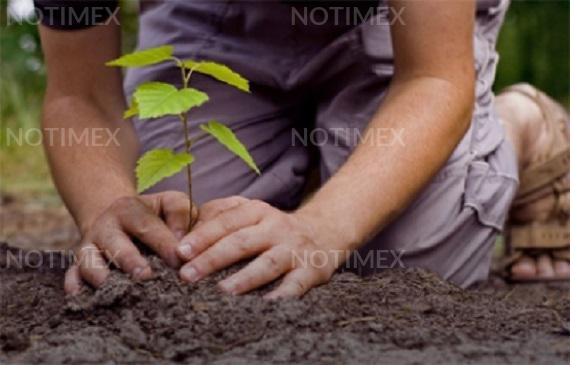 Supervisan reforestación de Reserva Nacional Tambopata en Perú 1