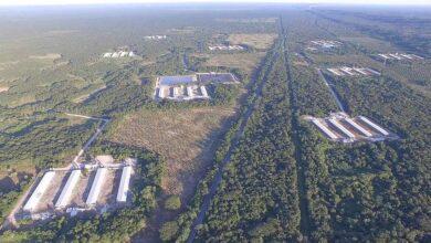 Gobierno federal da marcha atrás a permisos de 6 granjas porcícolas en Yucatán 9