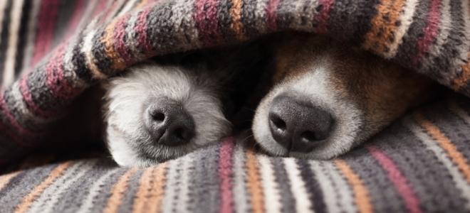 Una guía para proteger su casa de mascotas 1