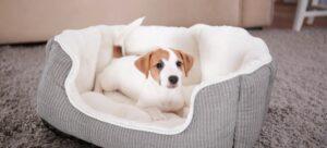 Productos de limpieza para mascotas domésticas: Cómo quitar la alfombra 1